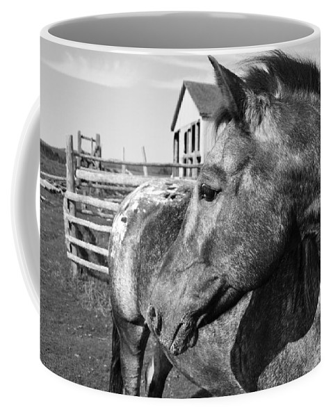 Horse Coffee Mug featuring the photograph Horse by Natasha Sweetapple