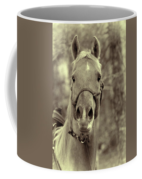 Horse Coffee Mug featuring the photograph Horse Stare by Kathy Clark