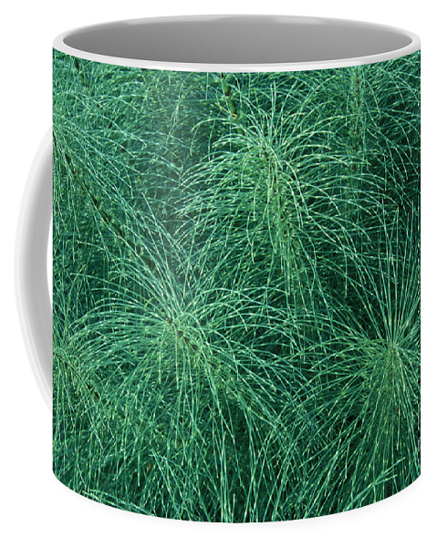 Bronstein Coffee Mug featuring the photograph Horsetail Fern by Sandra Bronstein
