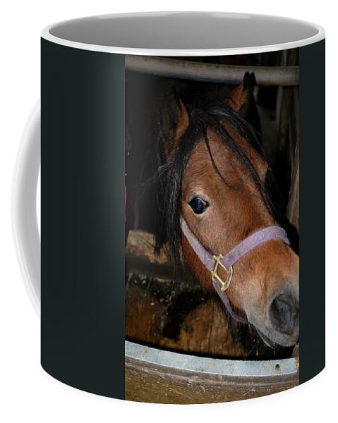 Usa Coffee Mug featuring the photograph Horsing Around by LeeAnn McLaneGoetz McLaneGoetzStudioLLCcom