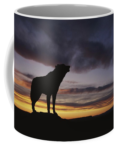North America Coffee Mug featuring the photograph Howling Wolf Silhouetted Against Sunset by Norbert Rosing