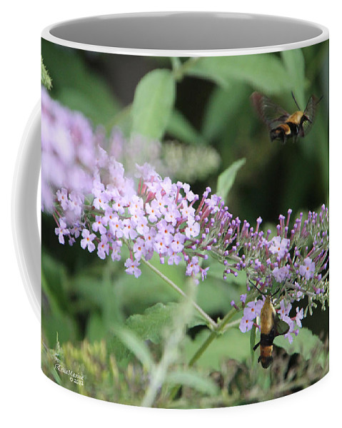 Insect Coffee Mug featuring the photograph Hummingbird Moth by Ericamaxine Price
