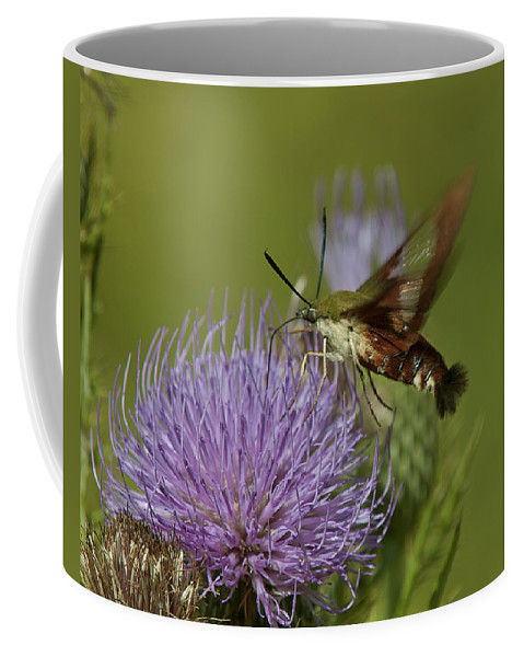 Nature Coffee Mug featuring the photograph Hummingbird Or Clearwing Moth Din178 by Gerry Gantt