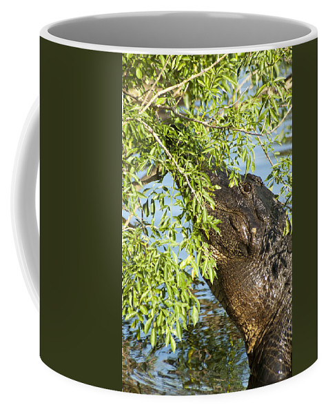 Alligator Coffee Mug featuring the photograph I Can See You by Carolyn Marshall