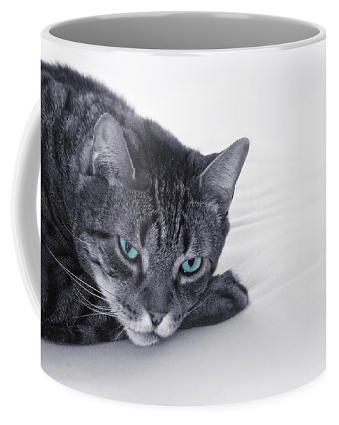 Cat Coffee Mug featuring the photograph I Close My Eyes And Count To T by Evelina Kremsdorf