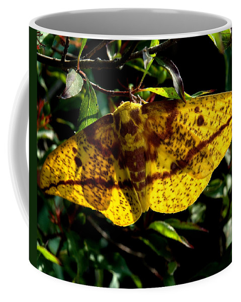 Nature Coffee Mug featuring the photograph Imperial Moth Din053 by Gerry Gantt