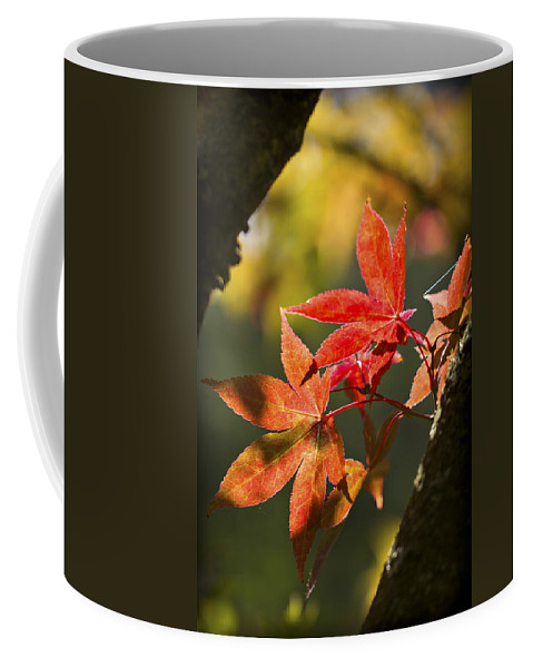 Red Coffee Mug featuring the photograph In Between... by Clare Bambers