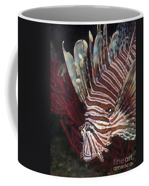 Red Coffee Mug featuring the photograph Indonesian Lionfish On A Wreck Site by Karen Doody