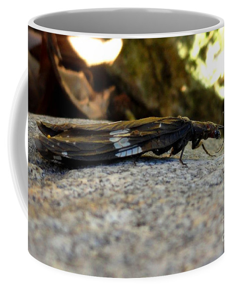Insect Coffee Mug featuring the photograph Insect Stripes by Meandering Photography