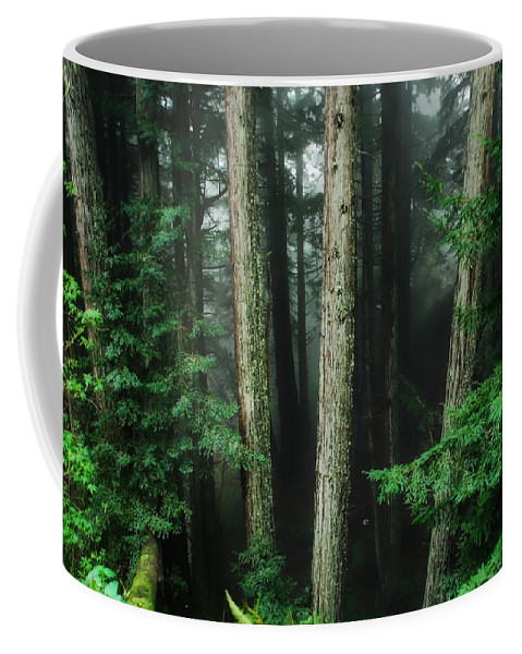 Redwood Coffee Mug featuring the photograph Into The Wild by Donna Blackhall