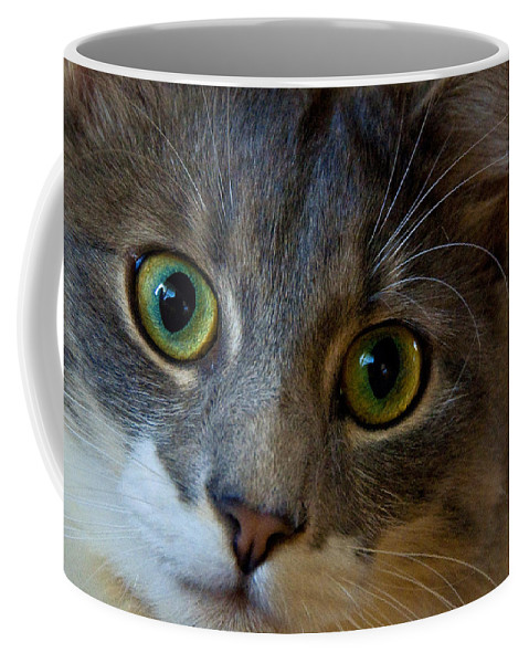 Cat Coffee Mug featuring the photograph Intrigue by Christine Stonebridge