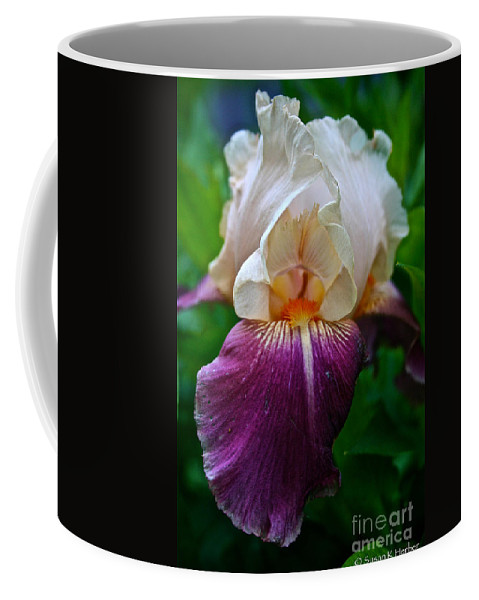 Plant Coffee Mug featuring the photograph Iris Finery by Susan Herber