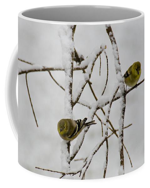 Usa Coffee Mug featuring the photograph Is It Snowing On Your Side by LeeAnn McLaneGoetz McLaneGoetzStudioLLCcom