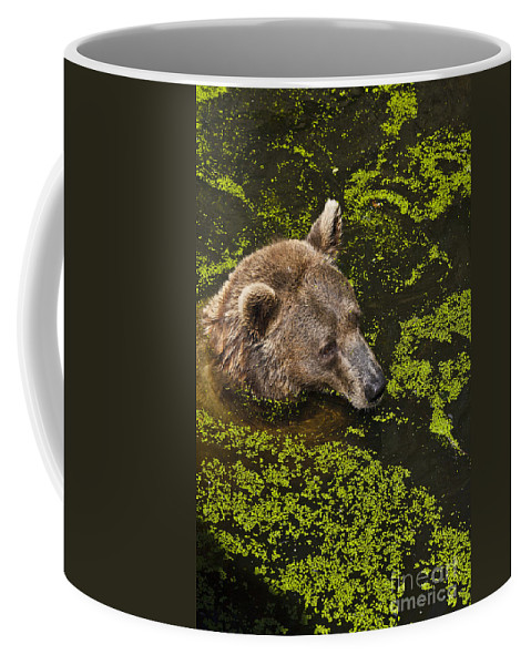 Nature Coffee Mug featuring the photograph It's Cool In Here by Heiko Koehrer-Wagner