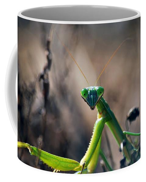Praying Mantis Coffee Mug featuring the photograph It's Time To Pray by Lori Tambakis