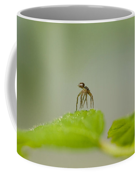 Spider Coffee Mug featuring the photograph Itsy Bitsy Spider by Kathy Clark