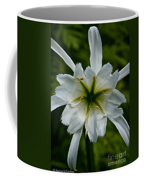 Plant Coffee Mug featuring the photograph Ivory Star by Susan Herber