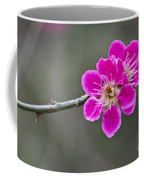 April Coffee Mug featuring the photograph Japanese Flowering Apricot. by Clare Bambers