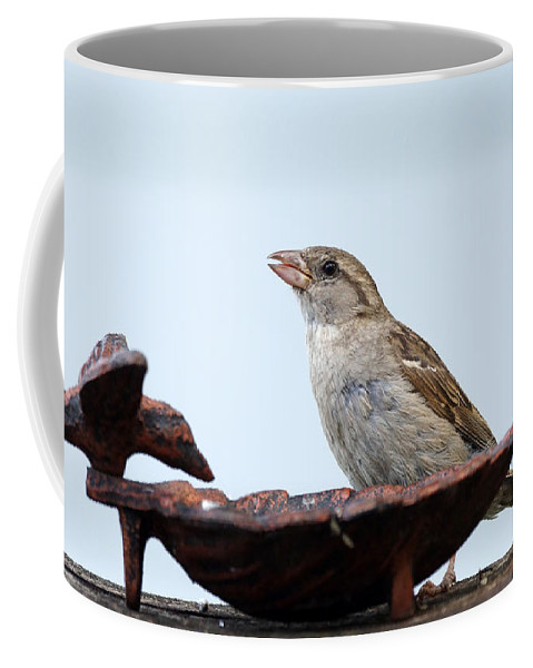 Birds Coffee Mug featuring the photograph Jelly Lover by Lori Tordsen