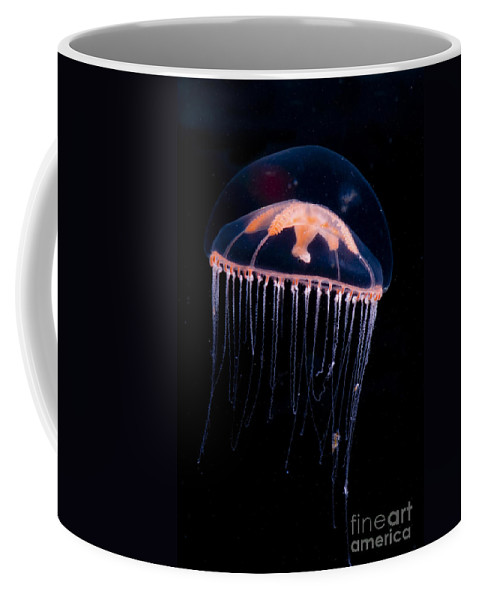 Ptychogena Coffee Mug featuring the photograph Jellyfish by Dante Fenolio