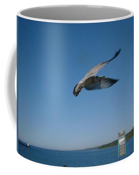 Seagull Coffee Mug featuring the photograph Jonathan Seagull by Bonfire Photography