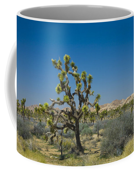 Art Coffee Mug featuring the photograph Joshua Trees Number 339 by Randall Nyhof