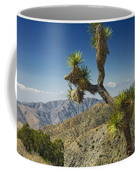 Art Coffee Mug featuring the photograph Joshua Trees Number 357 by Randall Nyhof