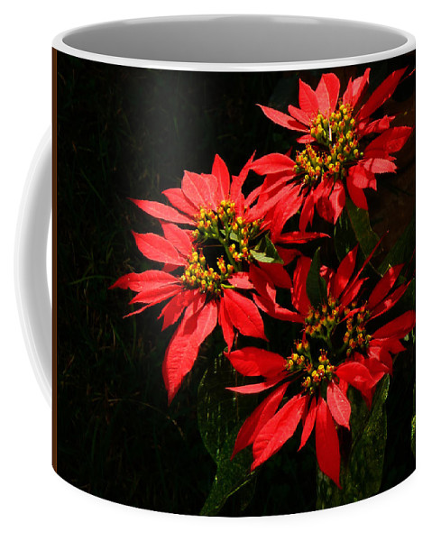 Euphorbia Coffee Mug featuring the photograph Joy And Prosperity IIi by Xueling Zou
