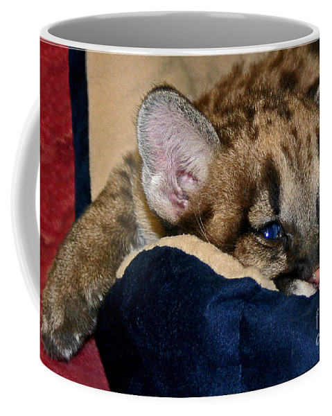 Cougar Coffee Mug featuring the photograph Just A Big Kitten by Rebecca Morgan