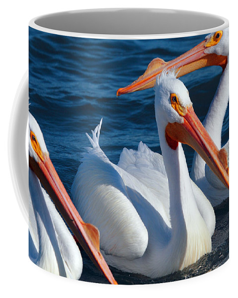 American White Pelican Coffee Mug featuring the photograph Just Hanging Out by Andrew McInnes