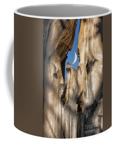 Southwest Coffee Mug featuring the photograph Just Passing By by Sandra Bronstein