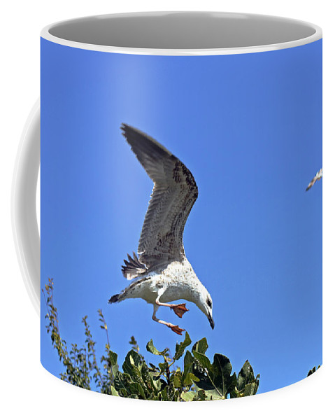 Gull Coffee Mug featuring the photograph Juvenile Herring Gull by Tony Murtagh