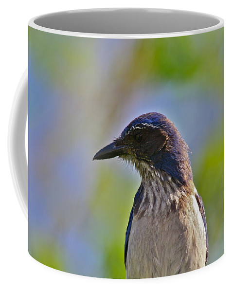 Bird Coffee Mug featuring the photograph Juvenile Jay by Diana Hatcher