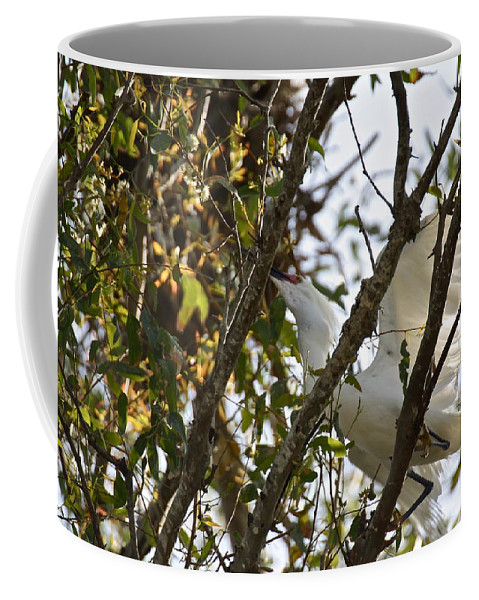 Birds Coffee Mug featuring the photograph Juvenile Snowy Egret by Diana Hatcher