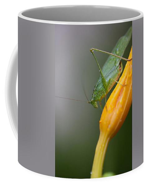 Bug Coffee Mug featuring the photograph Katydid by Karol Livote