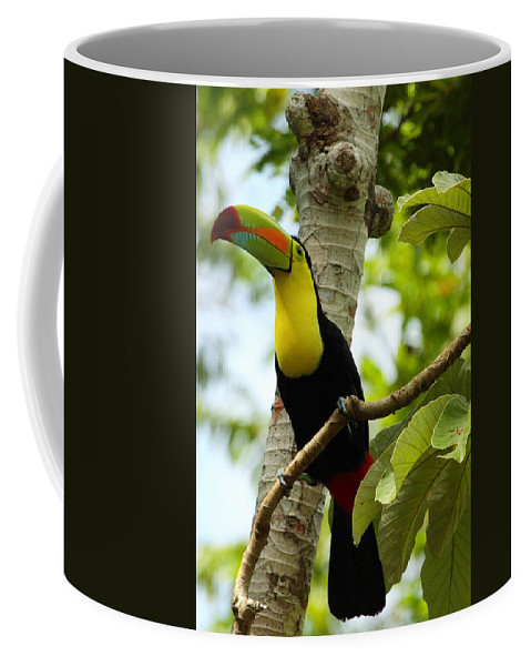 Keel-billed Toucan Coffee Mug featuring the photograph Keel-billed Toucan by Andrew McInnes