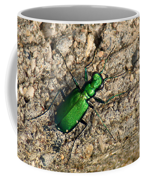 Green Coffee Mug featuring the photograph Keen Green by Bill Pevlor
