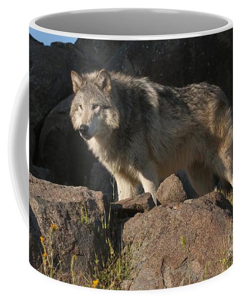 Bronstein Coffee Mug featuring the photograph Keeping Watch by Sandra Bronstein