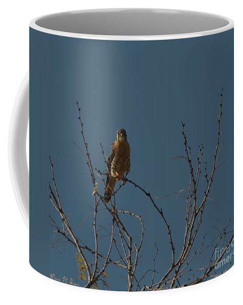 Bird Coffee Mug featuring the photograph Kestrel by Donna Brown