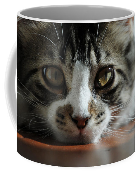 Cat Coffee Mug featuring the photograph Kitten by Molly Picklesimer