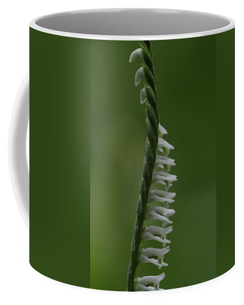 Northern Slender Ladies'-tresses Coffee Mug featuring the photograph Ladies' Tresses Orchid by Daniel Reed