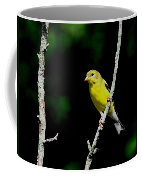 Goldfinch Coffee Mug featuring the photograph Lady Wrapped In Gold by Travis Truelove