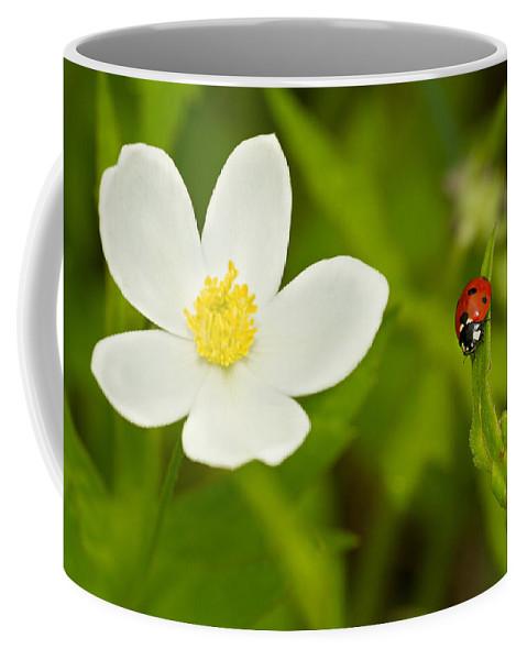 Ladybird Coffee Mug featuring the photograph Ladybird Beetle by Mircea Costina Photography