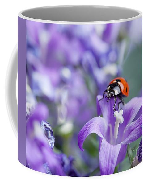 Ladybug Coffee Mug featuring the photograph Ladybug And Bellflowers by Nailia Schwarz