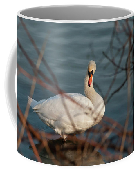 Guy Whiteley Photography Coffee Mug featuring the photograph Lake Ontario Swan by Guy Whiteley