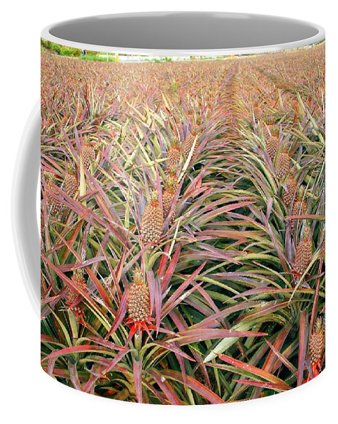 Pineapple Coffee Mug featuring the photograph Large Field With Pineapples by Yali Shi