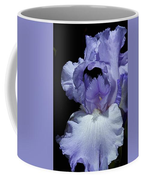 Iris Coffee Mug featuring the photograph Lavender Blue Iris by Phyllis Denton