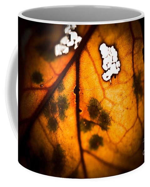 Fall Leaf Coffee Mug featuring the photograph Leaf Detail by Kim Henderson
