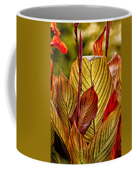 Leaves Coffee Mug featuring the photograph Leaf Lines by Lauri Novak