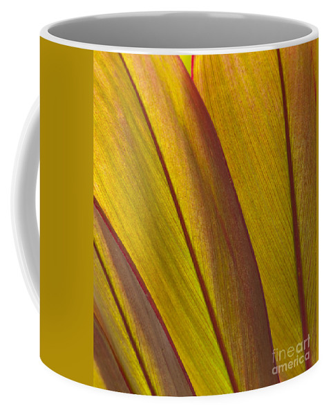 Bronstein Coffee Mug featuring the photograph Leaf Patterns by Sandra Bronstein